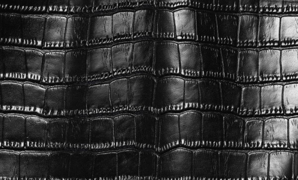 Alligator leather texture